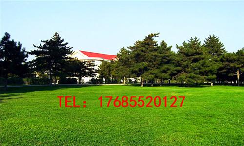 广州楼顶笼式足球场人造草坪 足球场假草坪人工草坪防