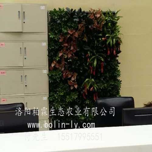阳台立体绿化设计 垂直绿化公司 洛阳柏霖生态农业有限公司