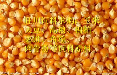 采购玉米、大豆、花生粕、高粱