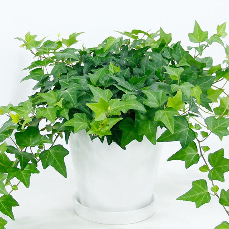 [供应]武汉植物租摆,武汉花卉租赁,室内景观设计,植物养护