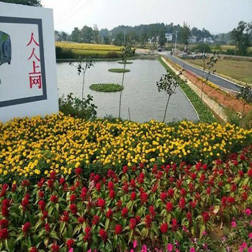 花卉种植高清大图
