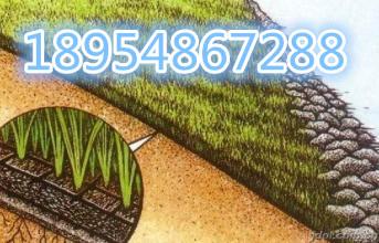 欢迎光临河源市三维植被网垫股份亚虎国际在线娱乐。集团。亚虎国际顶级老虎机平台