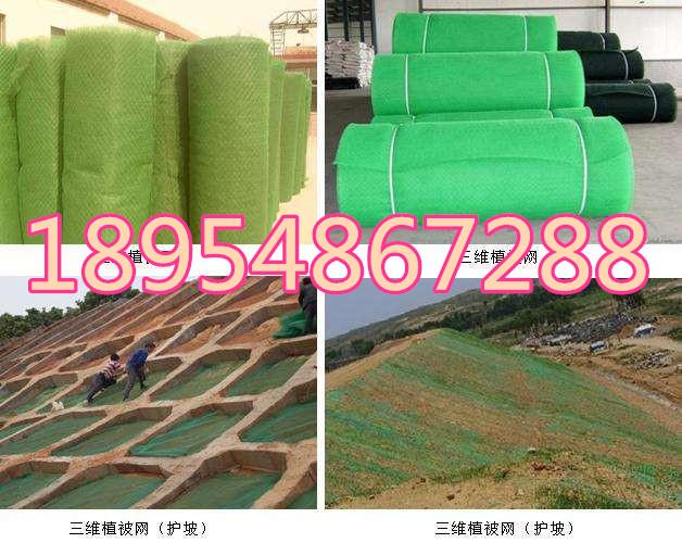 欢迎光临绵阳市三维植被网垫股份亚虎国际在线娱乐。集团。亚虎国际顶级老虎机平台