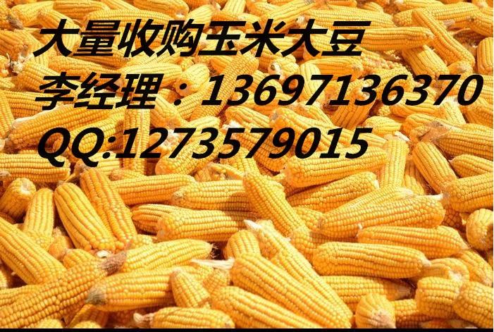 采购玉米大量