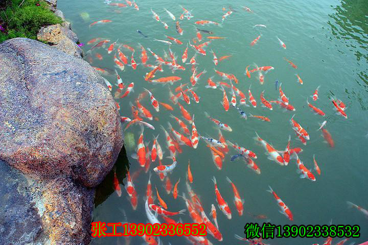 锦鲤鱼池净化器